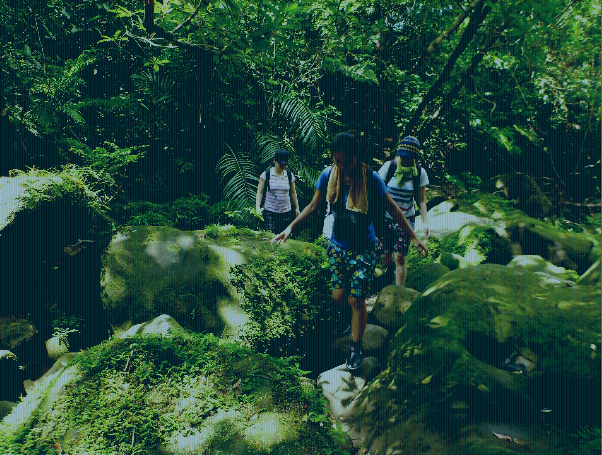 西表島カヌー自然ツアー
